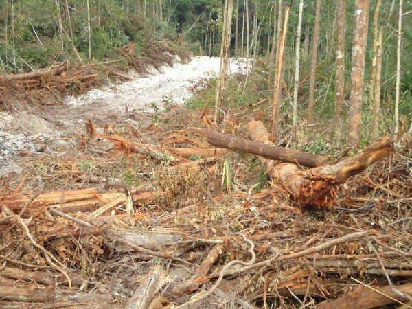 ///Hutan di Kubar 'sakit', akibat eksploitasi besar-besaran oleh perkebunan sait dabn perusahaan loging. (foto : dok. Mahakam Pos)///